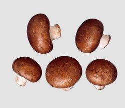 Prøv også Aromasopp, brun sjampinjong.