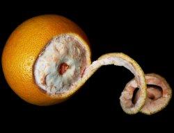 Prøv også Appelsin skall rått.