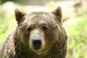 Prøv også Bjørn tilberedt.