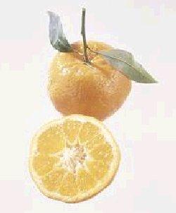 Forskjell på mandarin og klementin