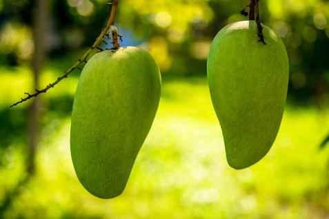 Bilde av Amchur, mangopulver.