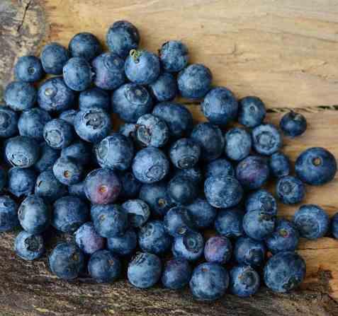 Bilde av Blåbær, rå.