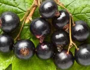 Bær er antioksidantbomber 2