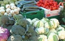 Grønnsaker fra Tofteland Gård i Søgne