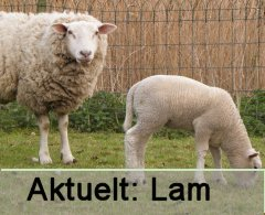 Aktuelt n�: Lam.