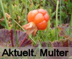Multer.