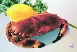 Tips til krabbe oppskrift.