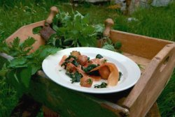 Prøv også Spekeskinke, lun nesle  og potetsalat.