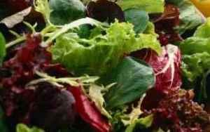 Prøv også Mesclum salat.