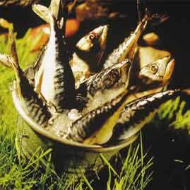 Prøv også Grillet makrell i folie.