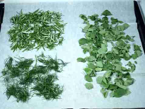 Bilde av T�rking av krydderurter.
